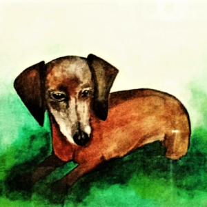 Dashshund in the Grass